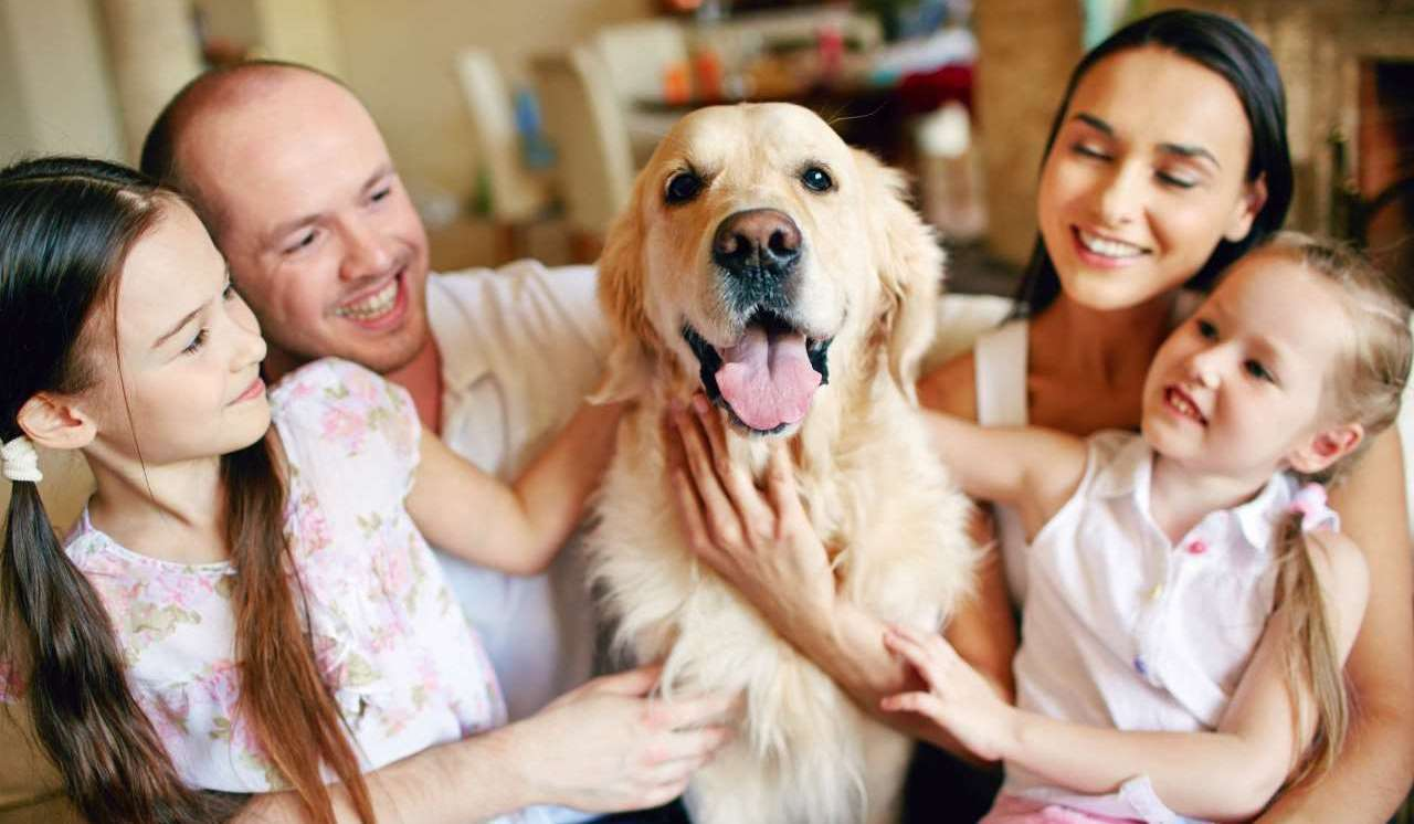 mutuelle pour animaux famille
